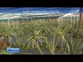 aloe-la-pianta-della-salute-siamo-andati-a-vedere-dove-nasce-a-marsala-in-sicilia