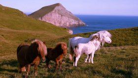 02 Isole Shetland