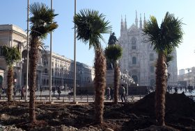 PALME IN PIAZZA DUOMO: IL PROGETTO FINANZIATO DA STARBUCKS