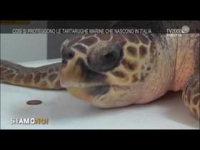 siamo-noi-centro-recupero-tartarughe-marine-di-portici-un-centro-delleccellenza-italiana