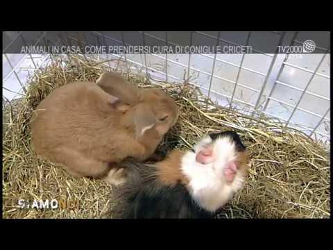 Siamo Noi - Animali in casa: come prendersi cura di coniglietti e criceti