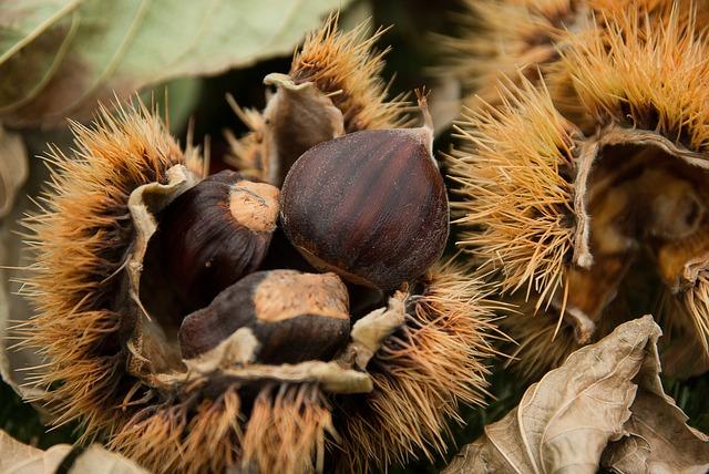 21 novembre – Castagne: proprietà, usi, benefici e valori nutrizionali