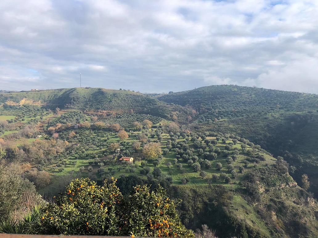 Tarsia (Cosenza)