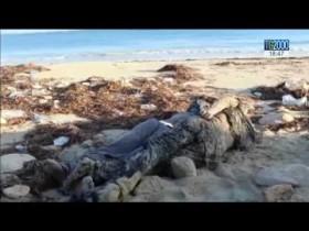 Migranti: recuperati 74 corpi a bordo di un'imbarcazione al largo delle coste libiche