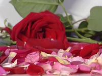 I rimedi naturali con le rose
