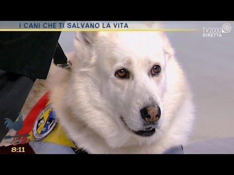 I cani che ti salvano la vita