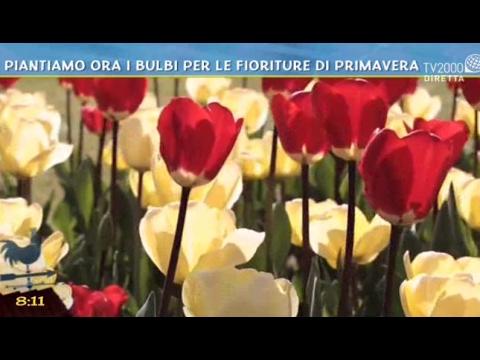 Piantiamo ora i bulbi per le fioriture di primavera