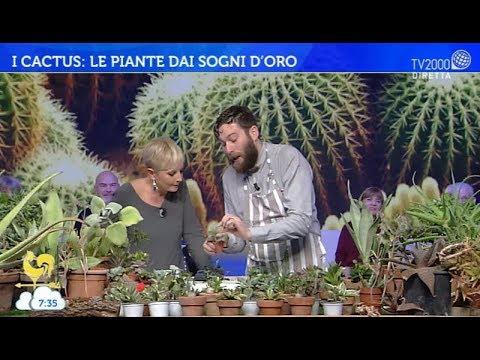 I cactus: le piante dai sogni d'oro