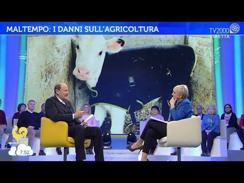 Maltempo: i danni all'agricoltura