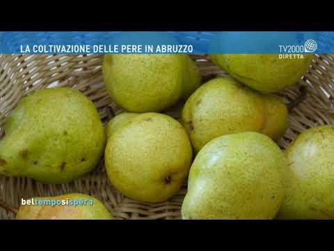 La coltivazione delle pere in Abruzzo