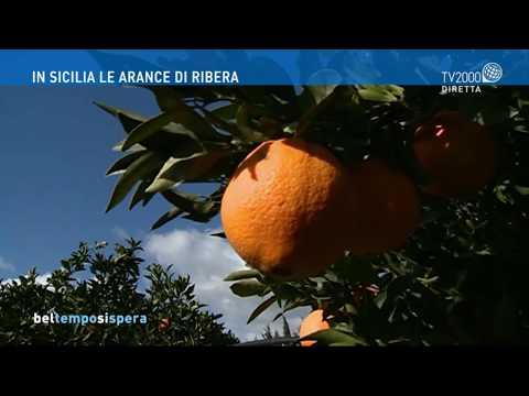 In Sicilia le arance di Ribera